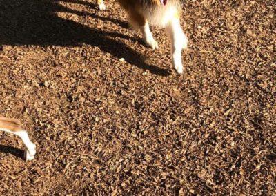 Happy Pup!