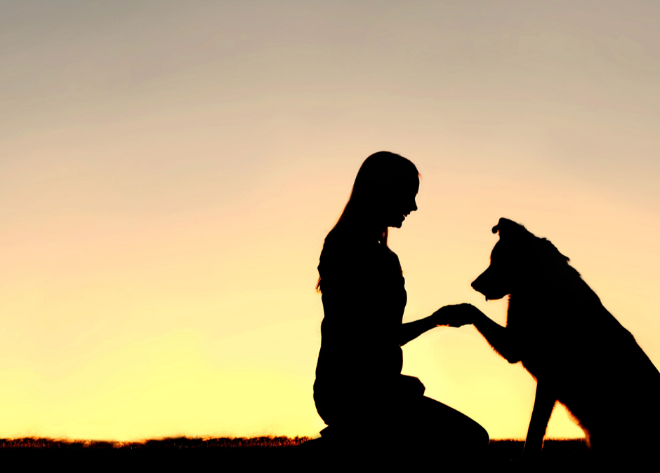 Dog Training – Effective Tips & Tricks to Teach Your Dog to Avoid Barking