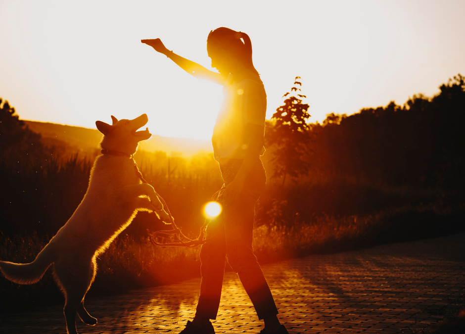 3 Important Skills Your Dog Needs to Learn -What to Know
