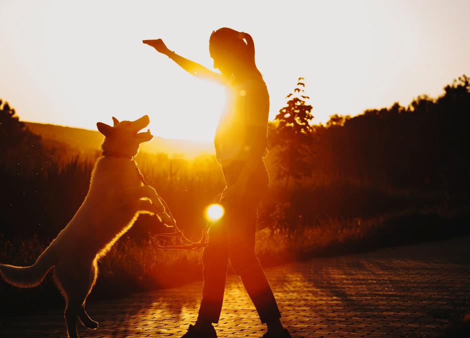 Common Myths About Dog Treats & Training